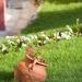 odessos-park-hotel-garden